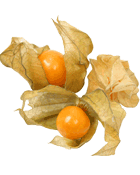 Physalis Cat 1