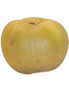 Pomme Canada grise Cal 75-80 mm Cat1