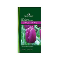 12 tulipes Purple prince