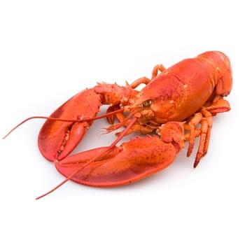 Orion homard sous glace 325g tous les produits surgel s - Comment cuisiner le homard cuit surgele ...