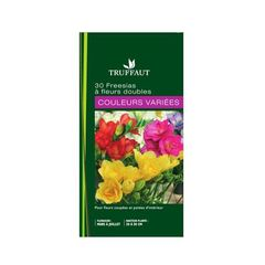 Freesia double 'couleurs variees'
