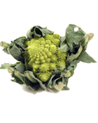 Chou Romanesco Cat 1