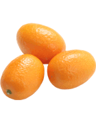 Kumquat Cat 1