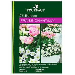 30 bulbes assortiment fraise chantilly