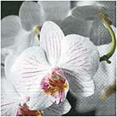 20 Serviettes en papier Beautiful Orchid, 3 plis, 33x33cm